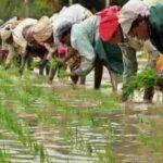 एमपी ई उपार्जन 2021 रबी/चन्ना/गेहूं फसल किसान पंजीयन |किसान कोड mpeuparjan.nic.in